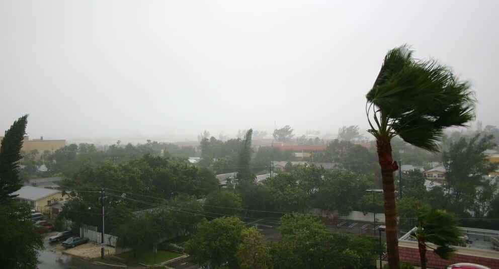 Hurricane Katrina blowing trees