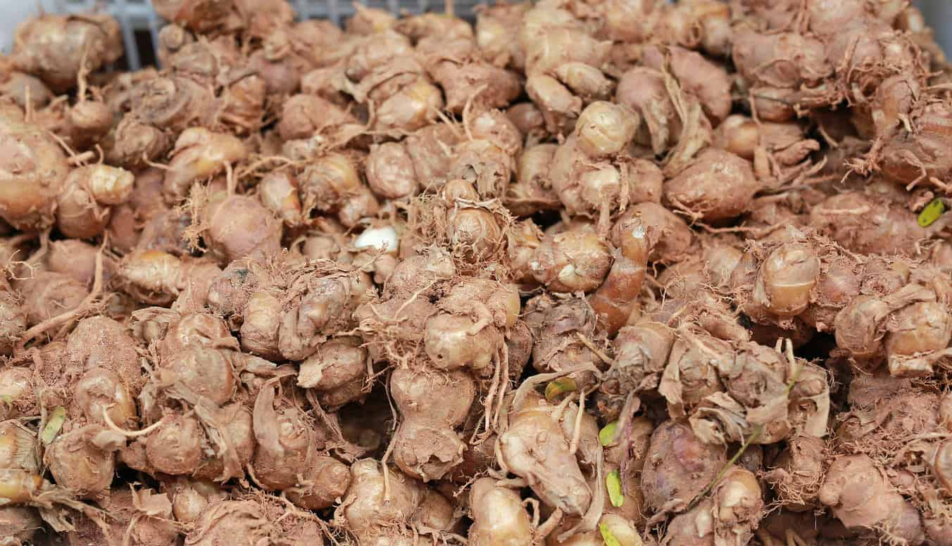 Kaempferia Ginger