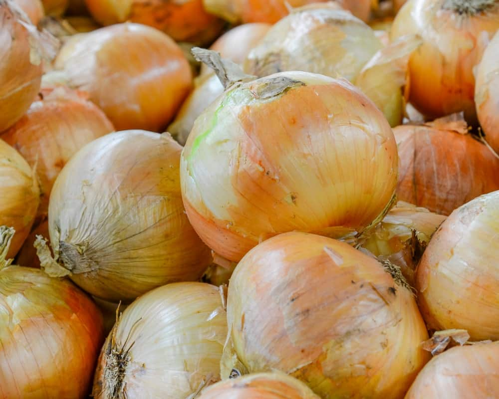 A bunch of Vidalia onions