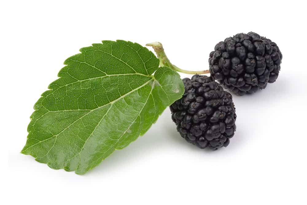 black mulberries