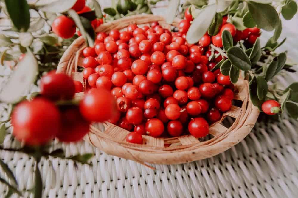 Red Lingonberries