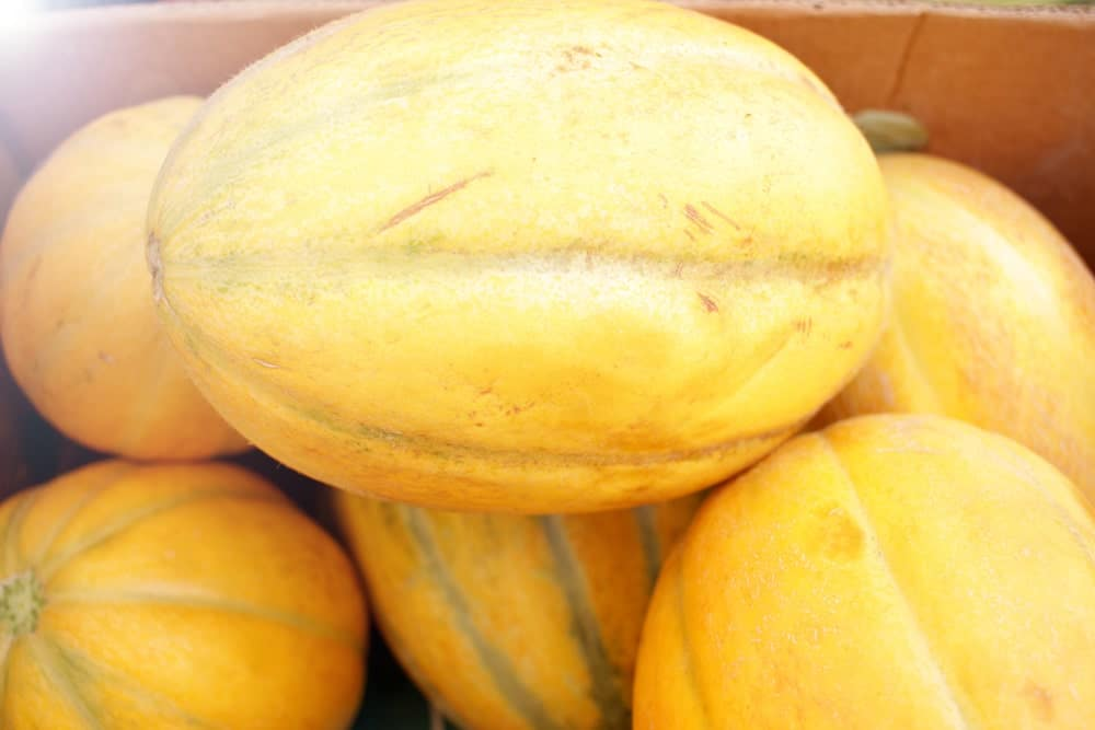 A closeup of a bunch of Autumn Sweet Melons in a cart.