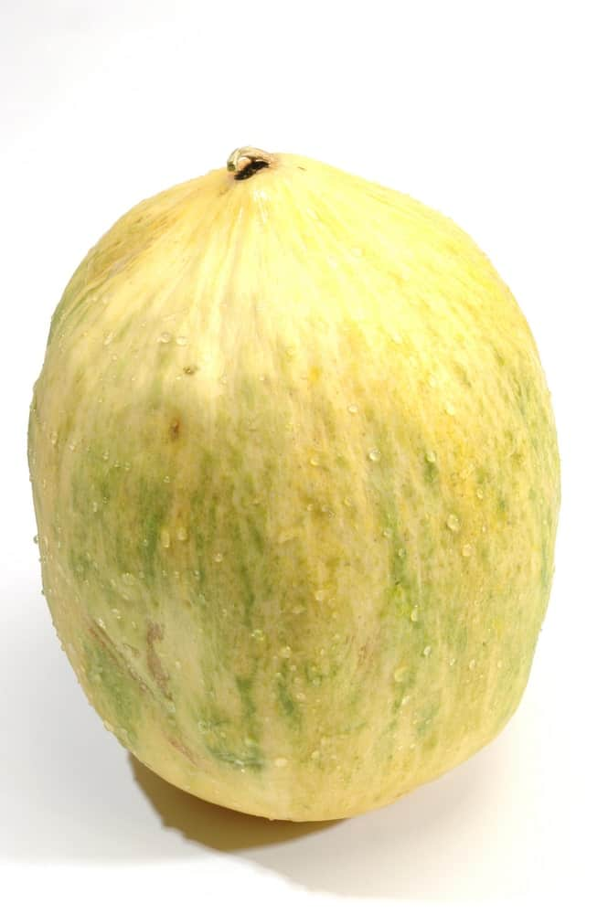 A large and juicy piece of Crenshaw melon fruit.