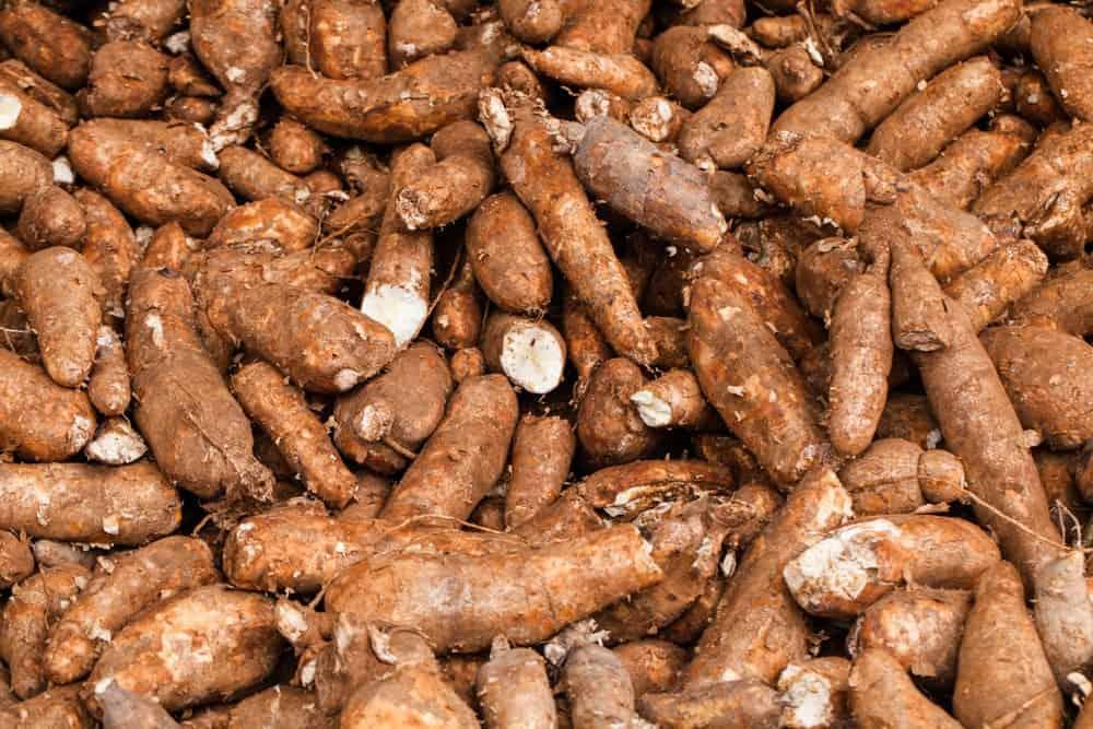 Piles of Manioc