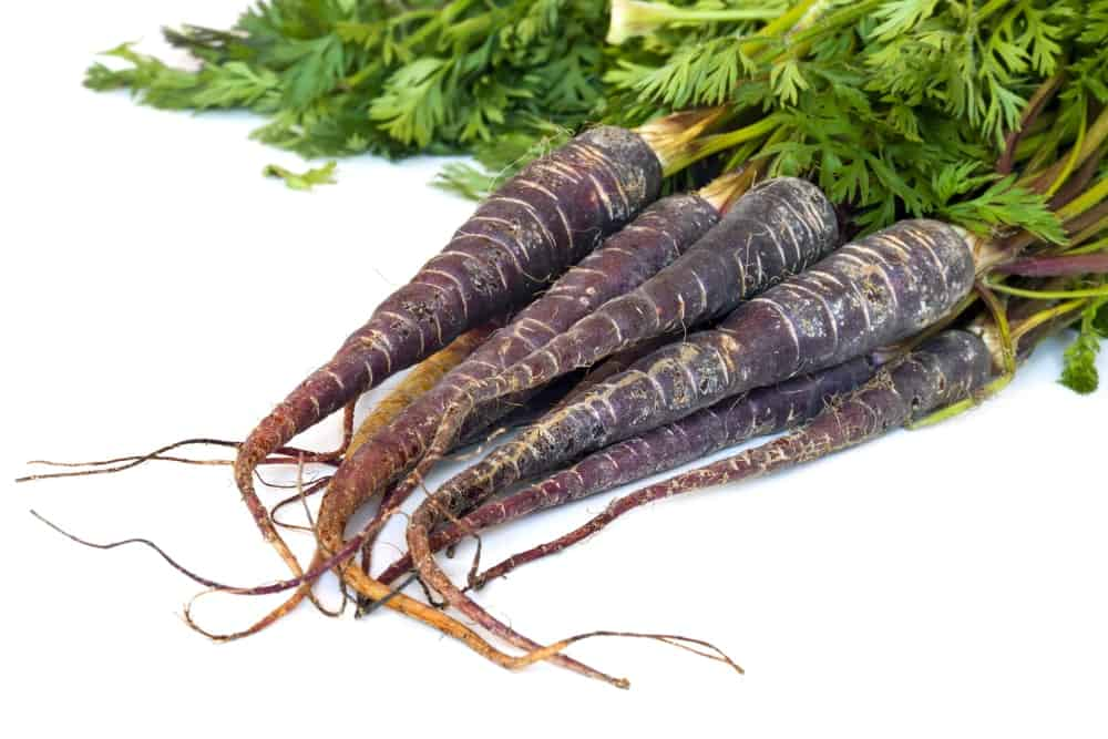 A beautiful harvest of Merida Carrots on a white background.