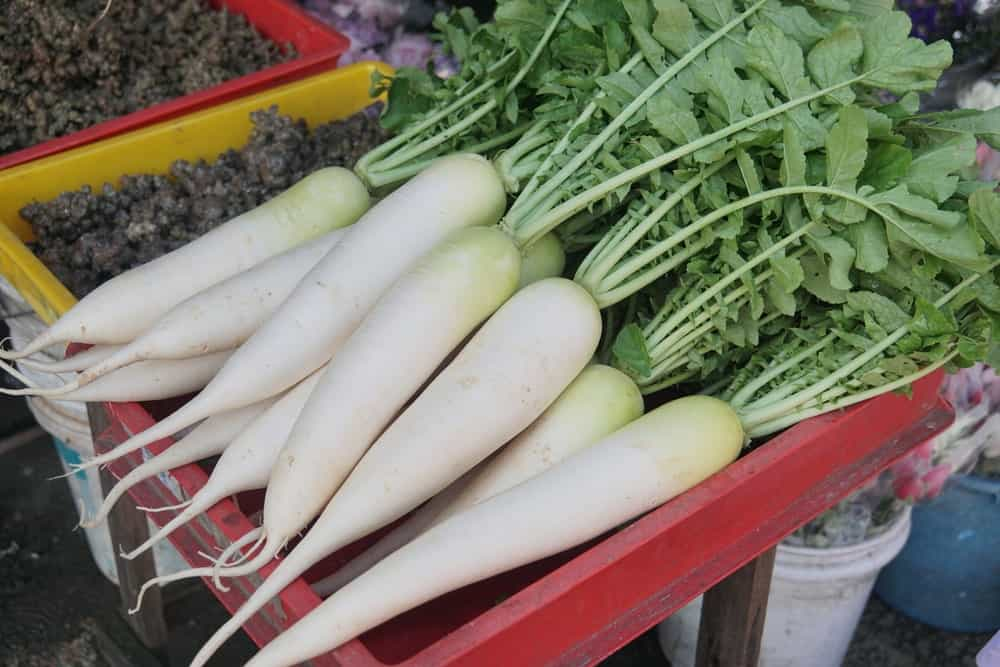 A bunch of healthy and organic White Satin Carrots freshly harvested.