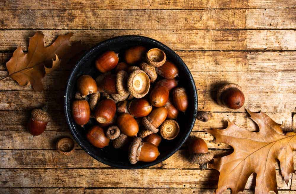 A bunch of Acorns in a bowl.