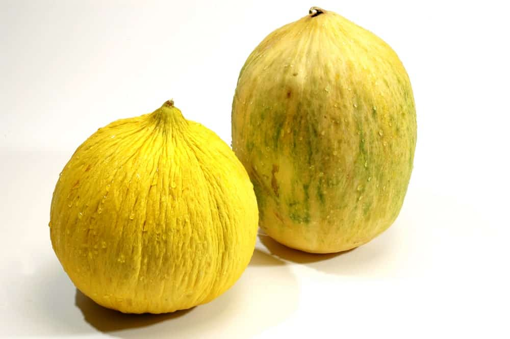A look at the Casaba Melon on the left and the Crenshaw Cantaloupe on the right.