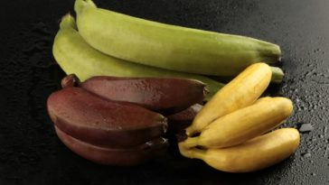Three varieties of colorful bananas on a dark surface.