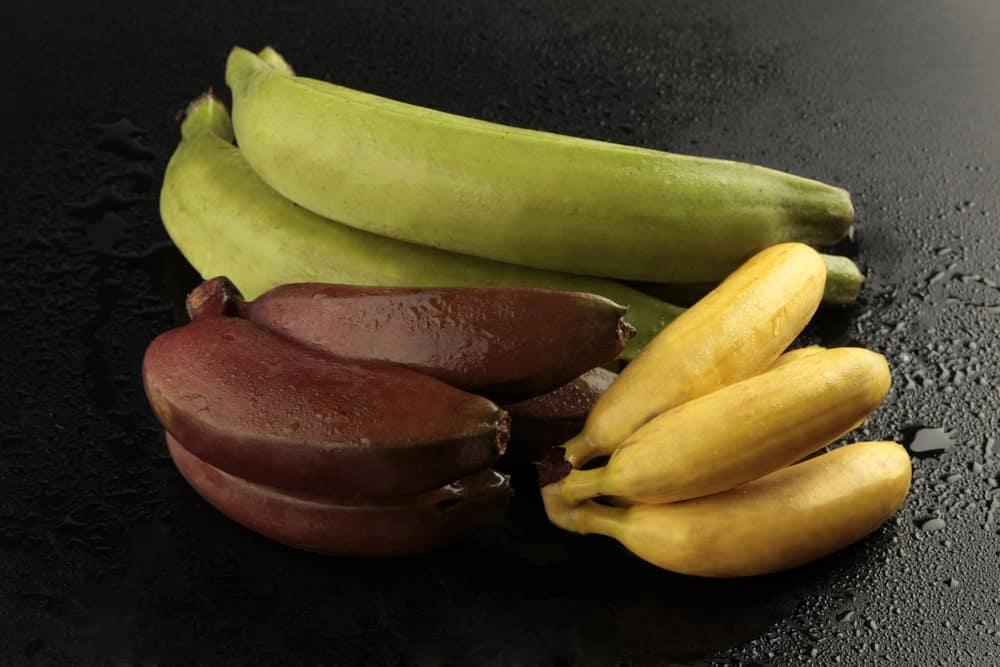 Three varieties of colorful bananas on a dark surface.