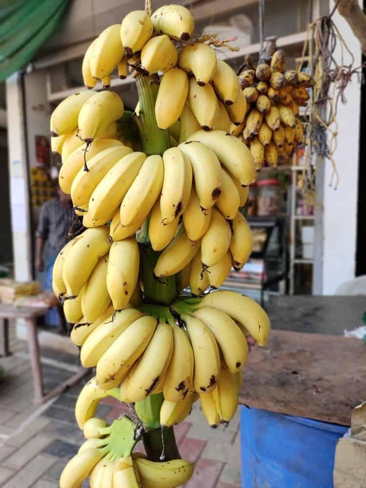 A close look at bundles of mysore bananas on display at the market.