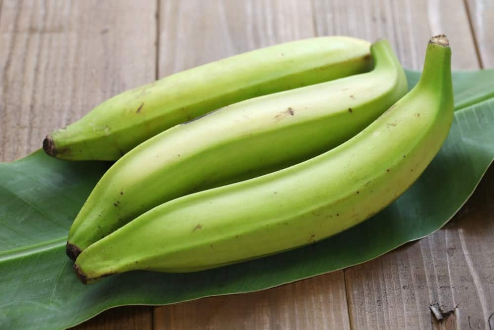 Three pieces of unripe green plantains.