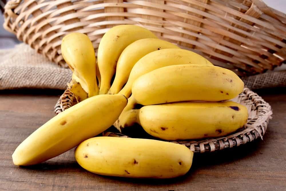 A bundle of dwarf Cavendish bananas on a wicker basket tray.