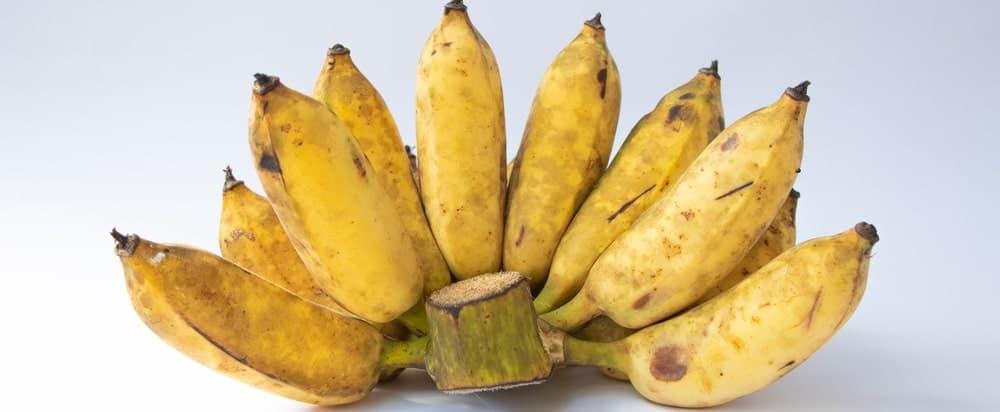 A bundle of ripe Pisang Raja bananas.