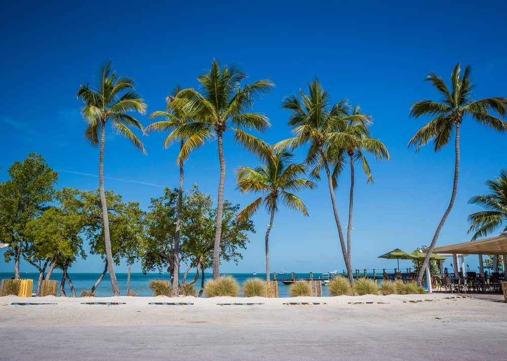 This is a look at tall West Coast Coconut Trees.