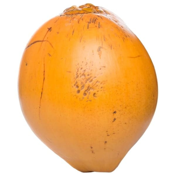 A close look at the Malayan yellow dwarf coconut.