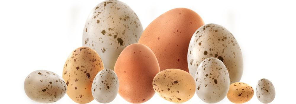 Various sizes and types of eggs on a white background.