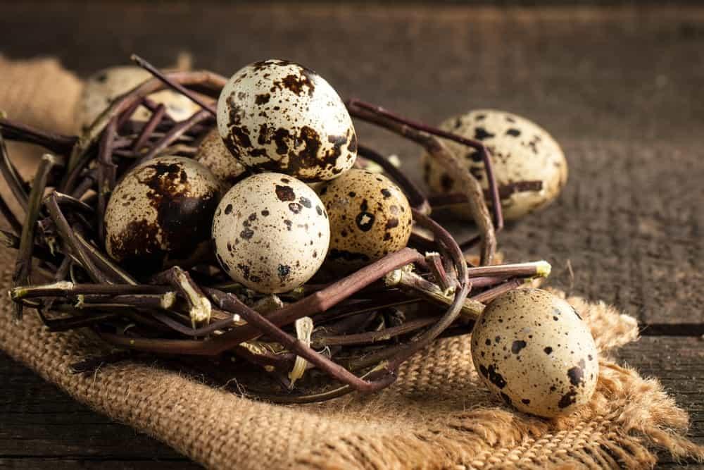 A bunch of quail eggs on a nest.