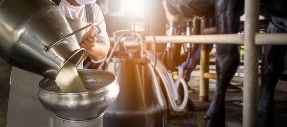 A dairy farmer pouring raw milk.