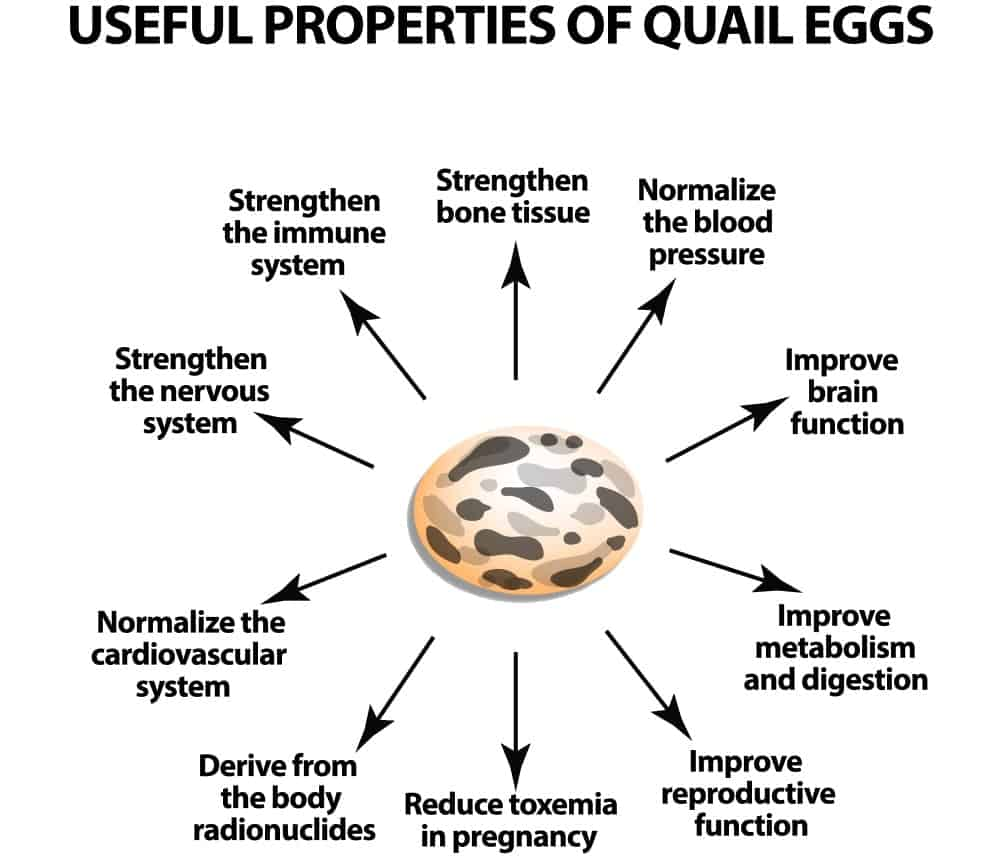 An illustrative chart depicting the healthy properties of a quail egg.