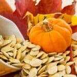 Parts of the Pumpkin and why they are important