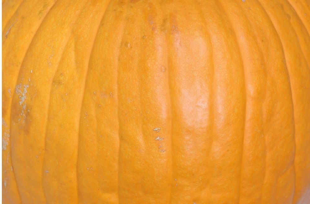 Pumpkin Shell, Skin and Ribs