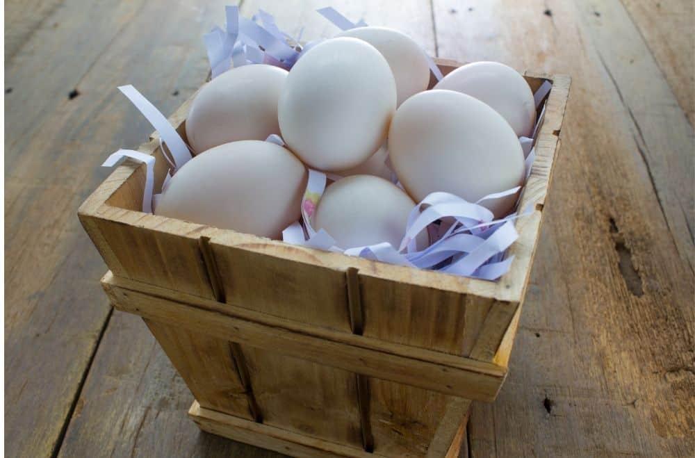 How long do fresh eggs last? Proper Egg Storage Tips