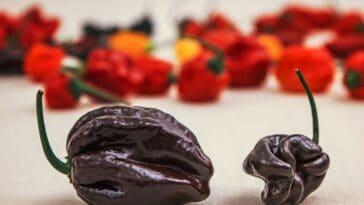 Chocolate Bhutlah